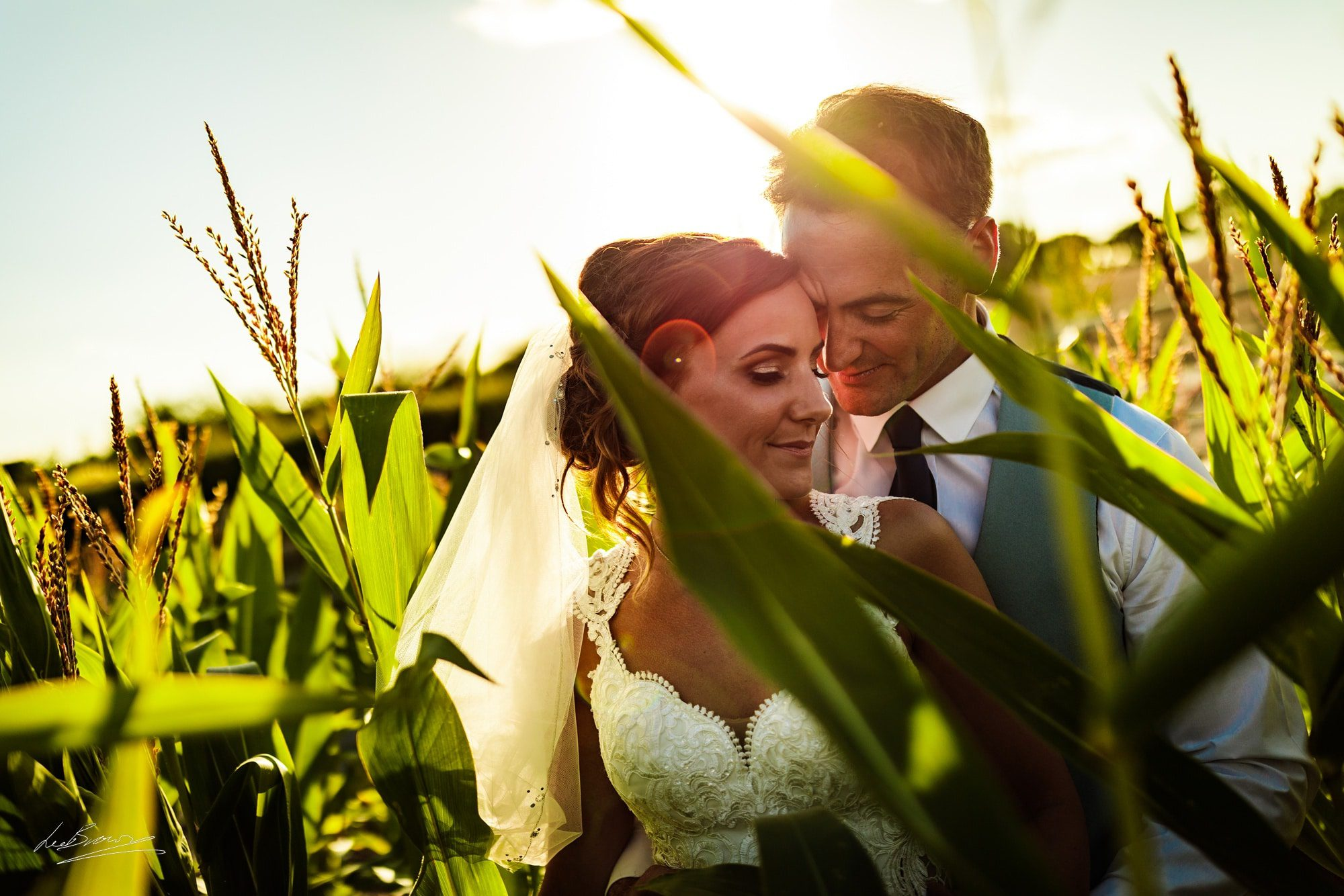 the couple stood having a moment in the cornfield at sandhole oak barn