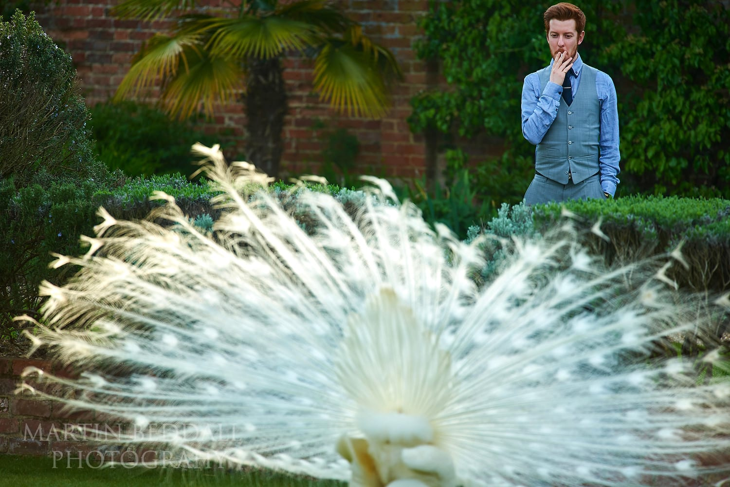 Guest and a peacock at Northbrook Park